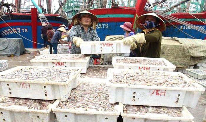 Ngư dân Quỳnh Lưu khai thác mực ống