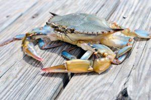 Cách chọn hải sản tươi ngon không phải ai cũng biết