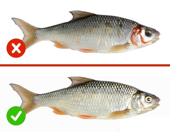 cách chọn cá tươi